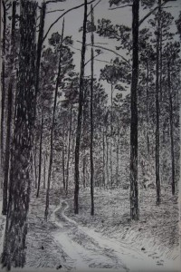 Road-in-the-Lost-Pines-60_-x40'#46E4