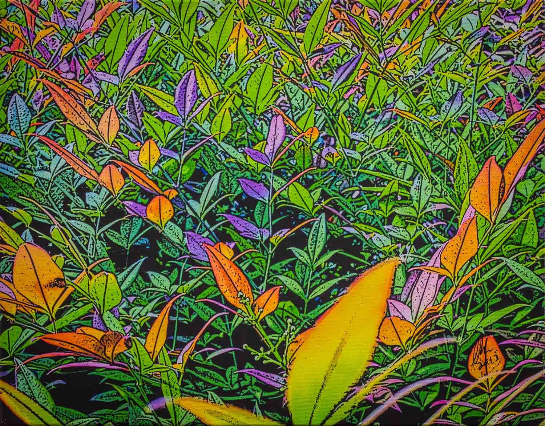 Photinia Exuberance - Craig Barras